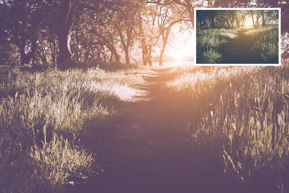 Forest Preset to Make