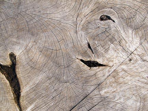 distressed wood texture 3